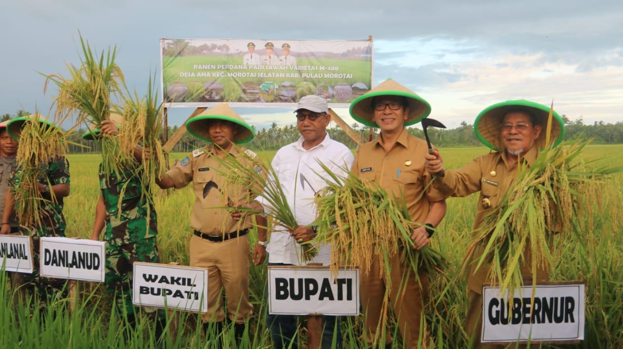 Gubernur Hadiri Panen Padi Perdana di Kab. Pulau Morotai